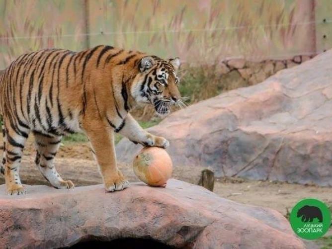 У луцькому зоопарку