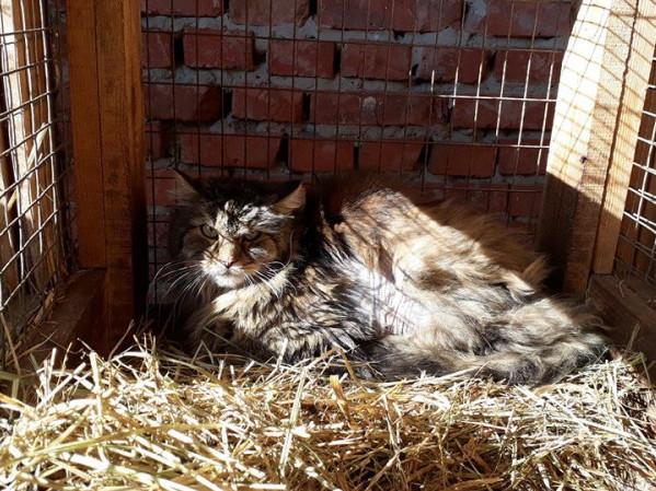 Кіт у КП «Ласка»