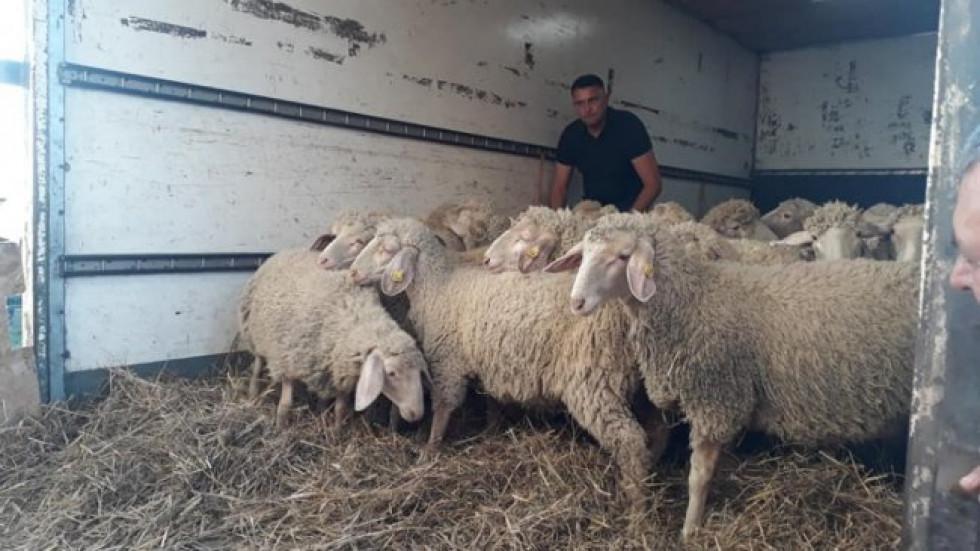 Власник найбільшої вівчарської ферми у Східній Європі, один з ведучих шоу Дмитро Огньов оголосив Дмитра переможцем