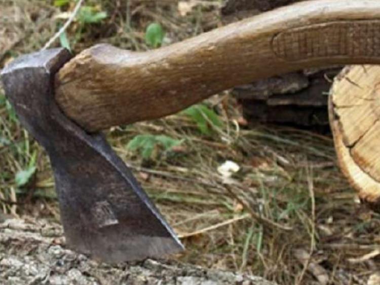 Вирубка дерев