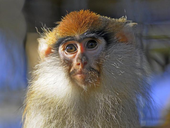 Мавпочка з луцького зоопарку