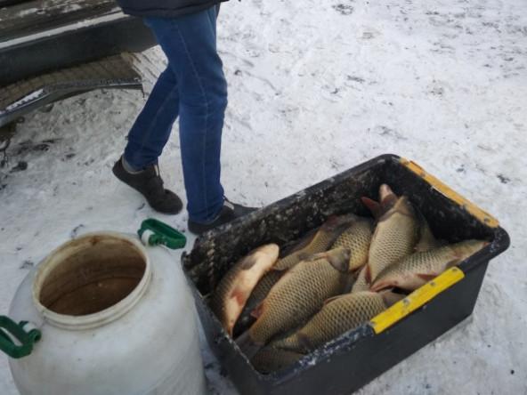 у Луцьку незаконно продавали рибу
