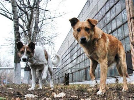 Безпритульні собаки