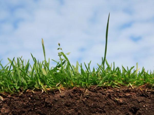 громаді повернули 6 гектарів землі