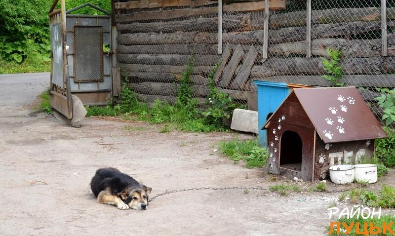 Проводжав нас старенький пес, якого кличуть Охоронцем