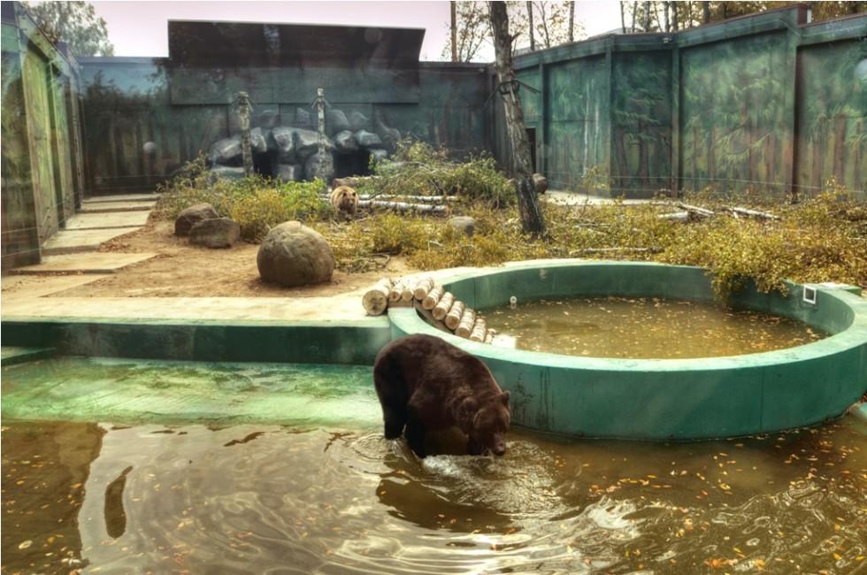 Ведмеді задоволені новим житлом