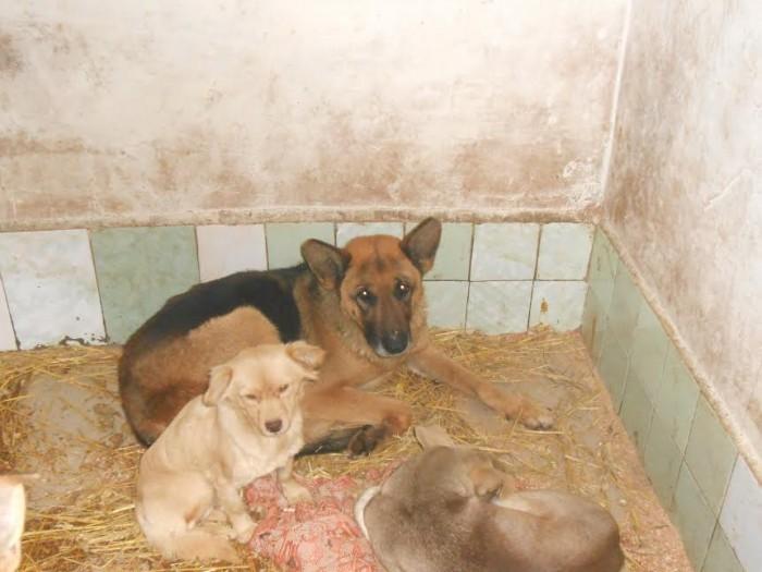 Саманта, якій не дозволяли народжувати, взялася доглядати цуценят у притулку