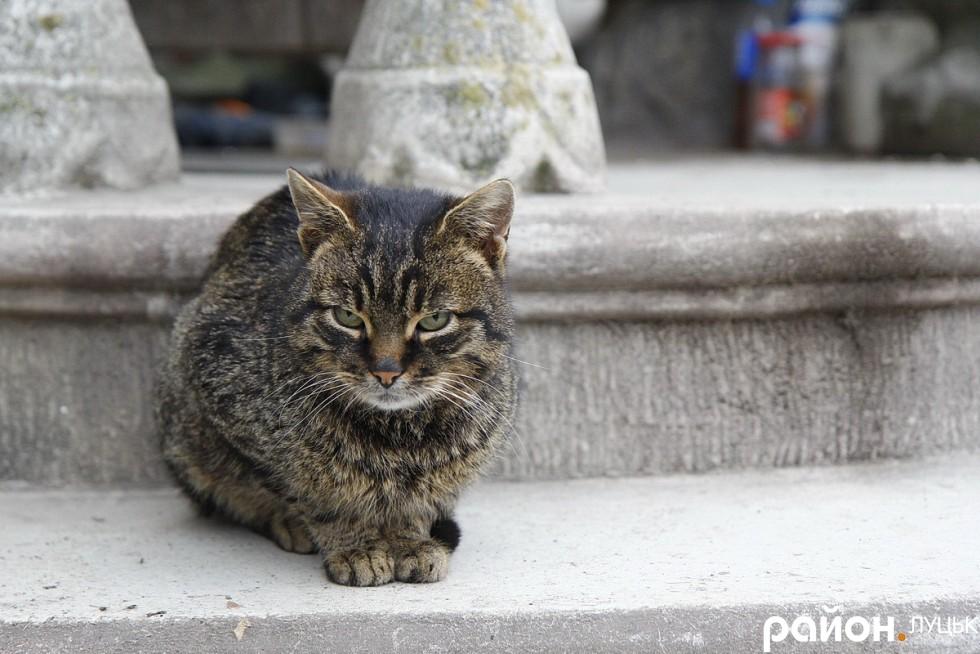 Кіт не боїться химерного будинку
