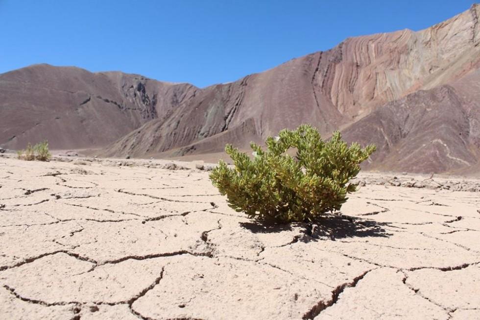 Пустеля Атакама у Чилі