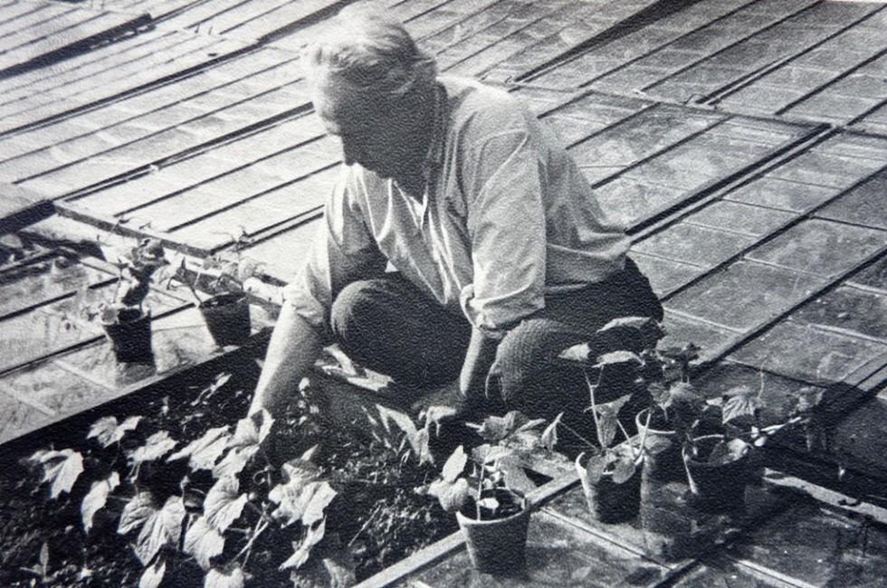 Адам Володимирович Мірецький, невтомний працівник, за притаманною роботою у парниковому господарств