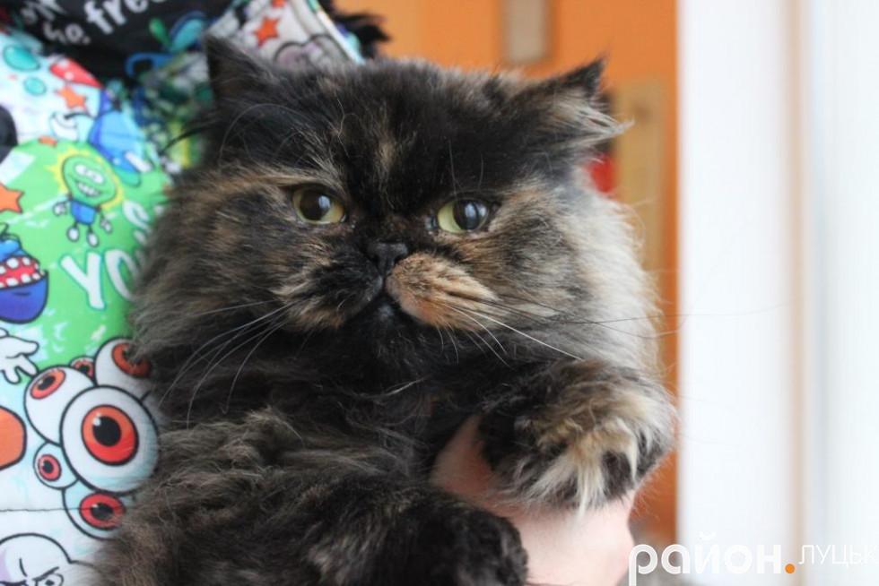 Нюша - найм'якша кішка закладу