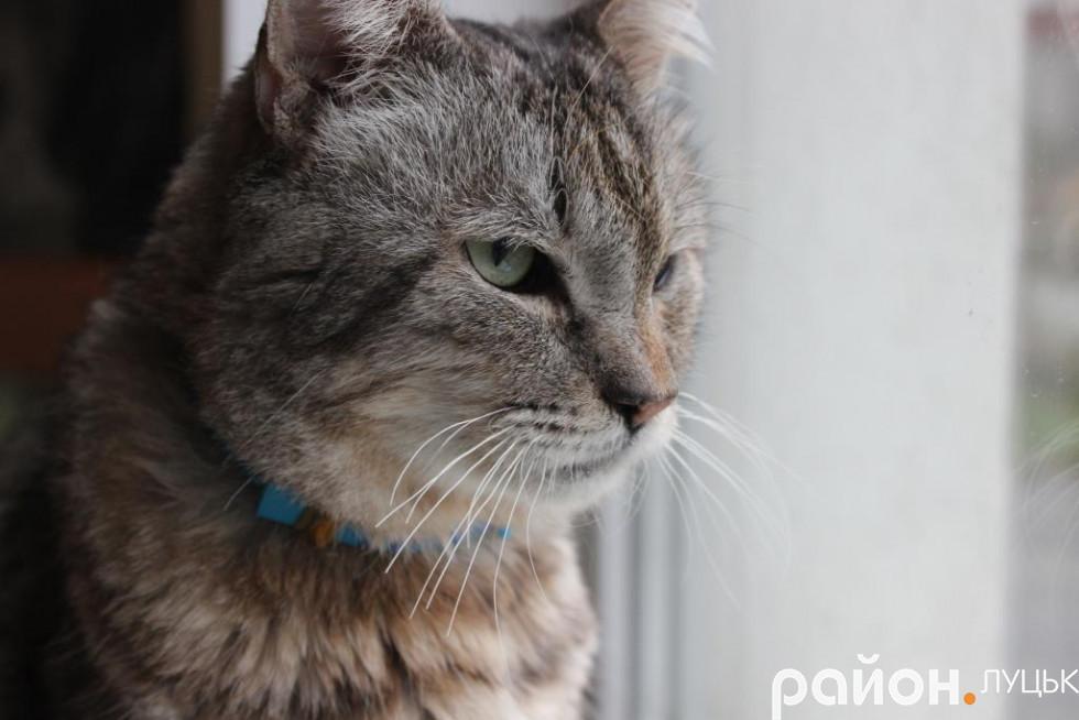 Лоґан - суворий старий кіт, якого потріпало життя