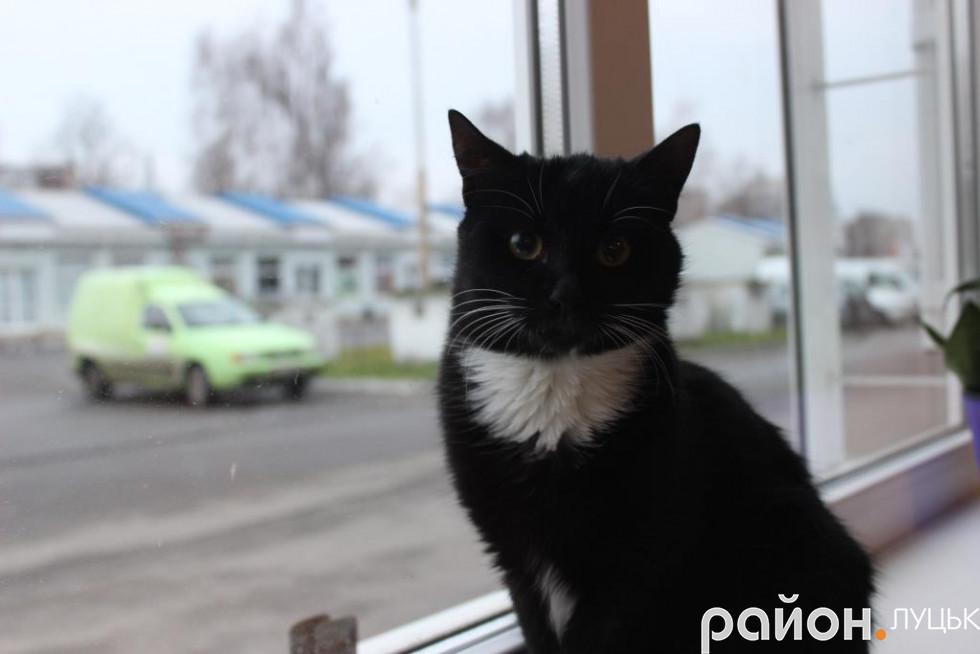 Жасмін видивляється потенційних господарів у вікно