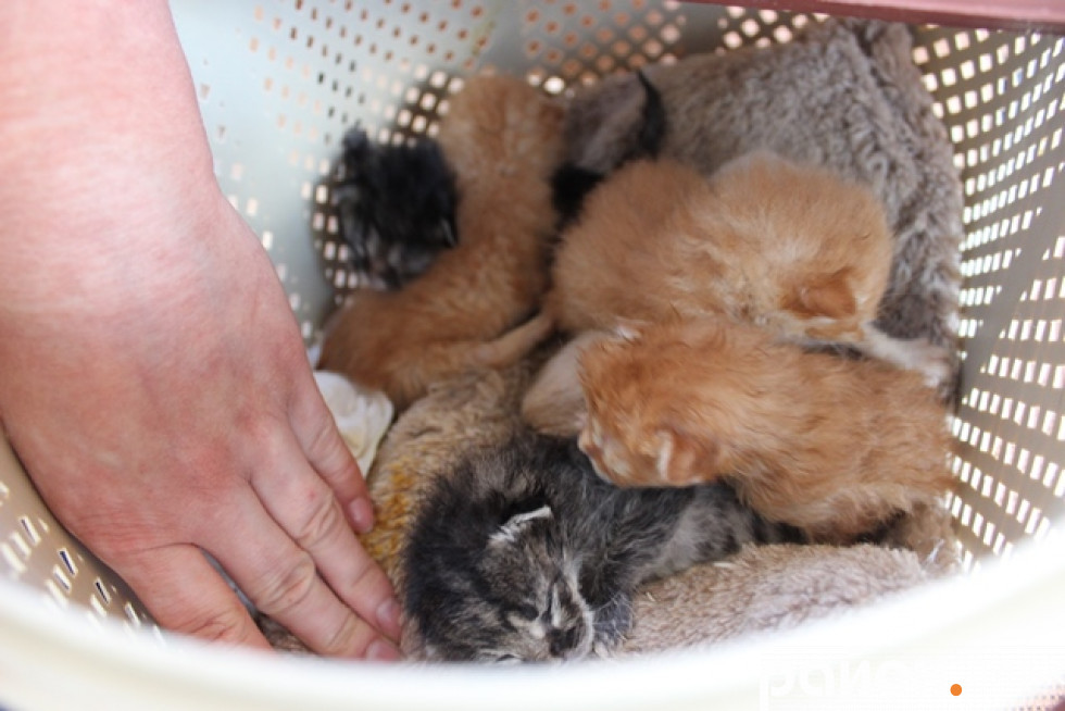 Кошенята, яких власники хотіли приспати