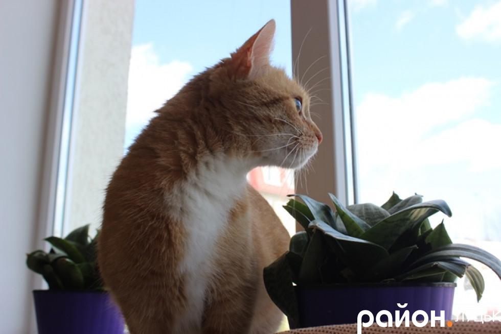 Мама Патрісії - кішка Тара