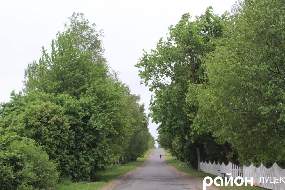 Зелена вулиця Миру