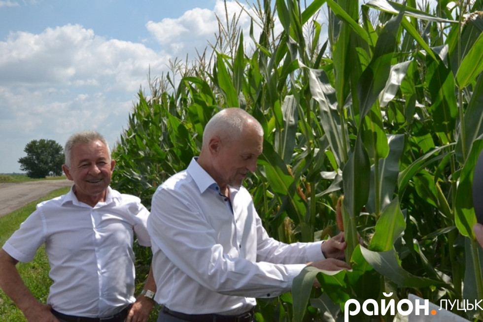 Оглядають, яка кукурудза росте на території громади