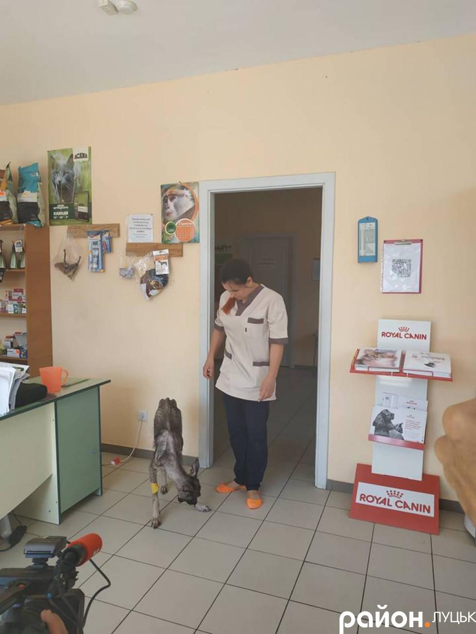 Белла під наглядом ветеринаркиЯни Коханюк