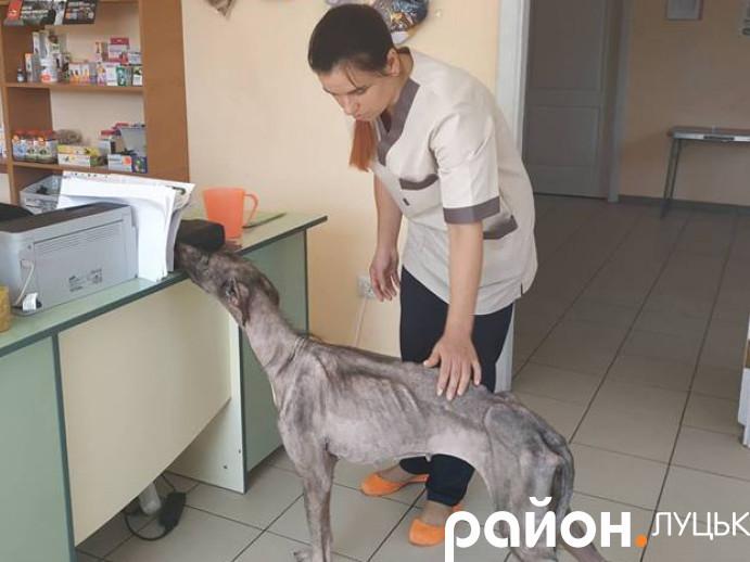 Небайдужі лучани врятували від голодної смерті собаку