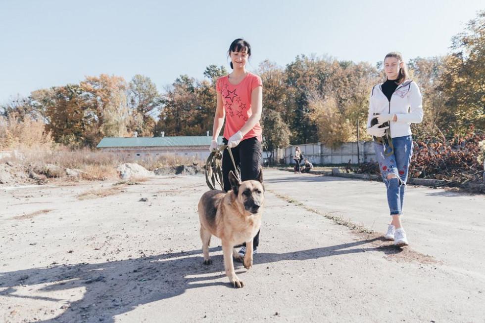 Волонтери вигулюють собак