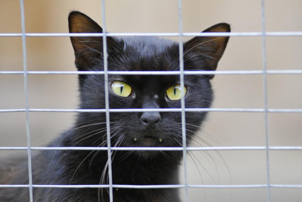 Для котів у підприємства є вакцини