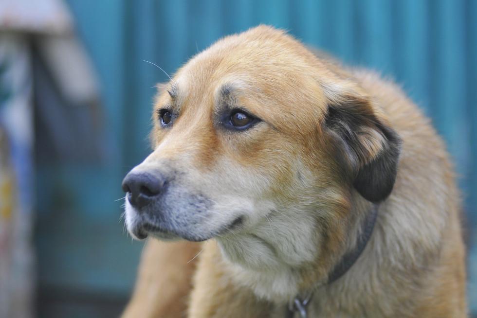 Необхідно закупити вакцини для собак