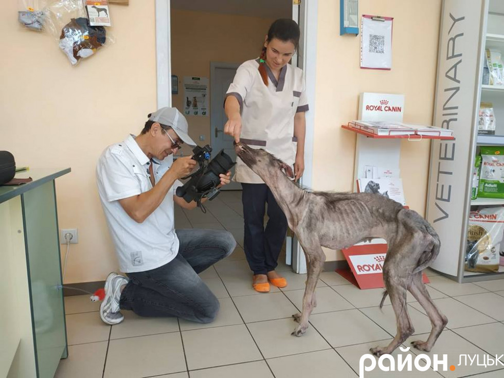 Белла у ветеринарній лікарні