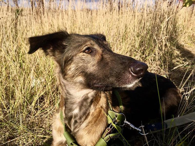 собака Белла