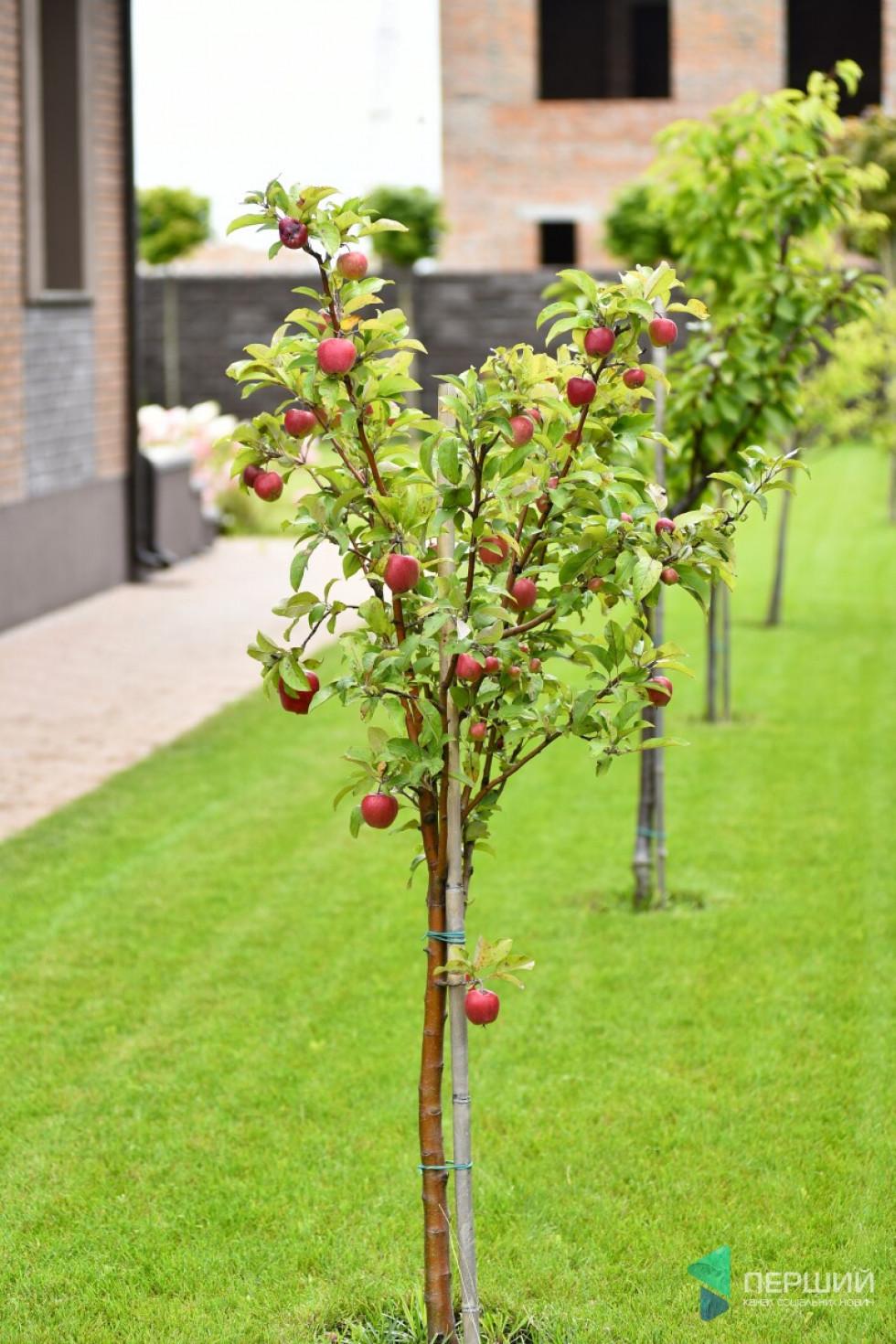 Усі дерева Андрій Разумовський садив сам. Каже, черешні та абрикоси уже з'їли, тепер дозрівають яблука