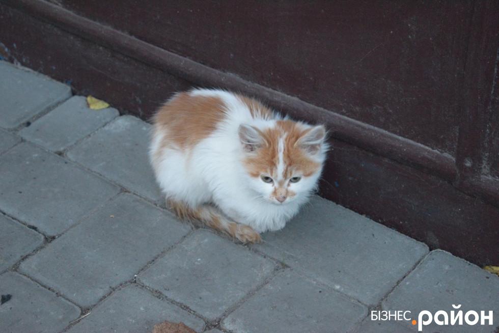 В цей же ж день до майстерні прийшов котик
