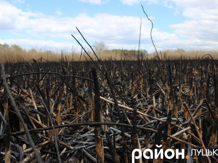 Гнідавське болото